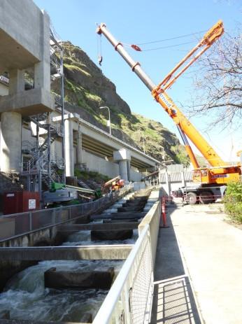 Fish ladder at Lower Granite Dam